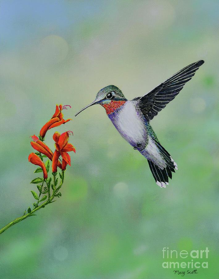 Hummingbird Beauty by Mary Scott