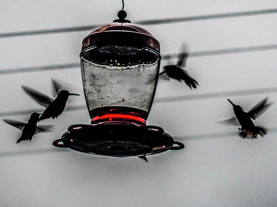 Hummingbird Dinner 1 Photograph