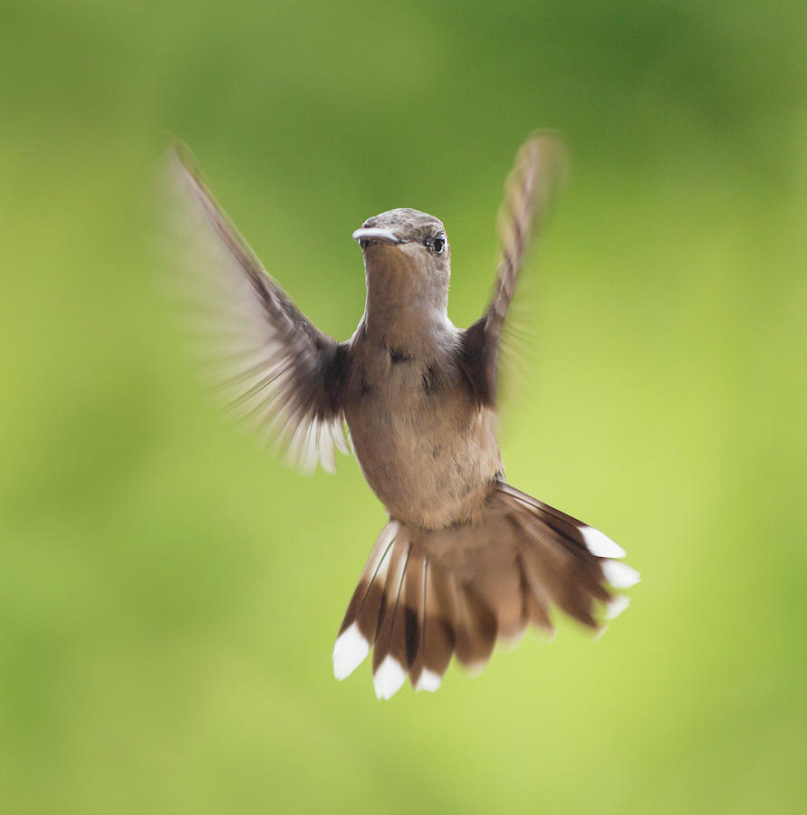Hummingbird Photograph - Hummingbird Hello There by Betsy Knapp
