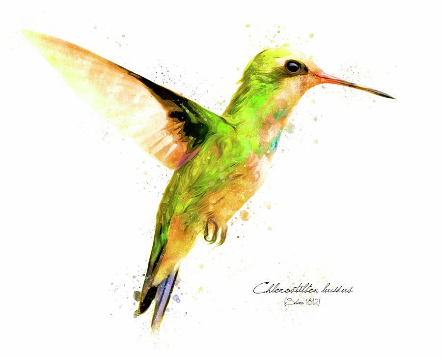 Hummingbird Digital Art - Hummingbird I by Geronimo Martin Alonso