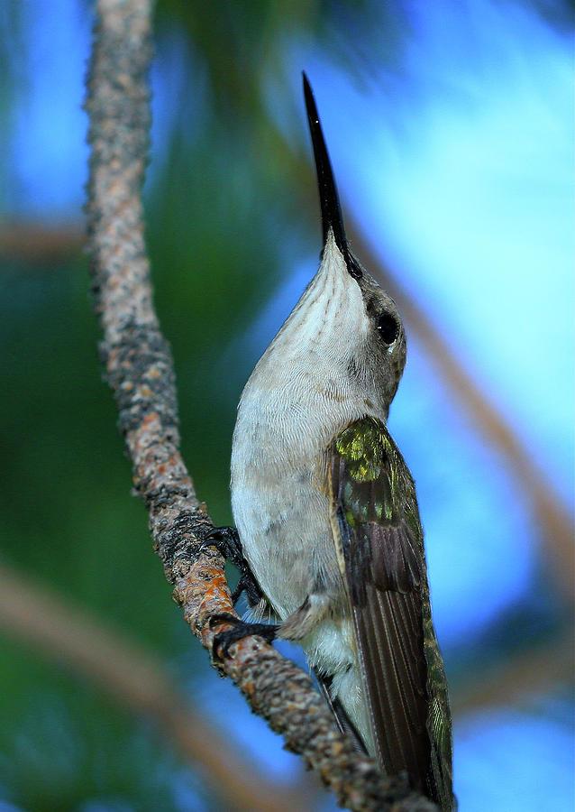 Hummingbird II by Paul Marto