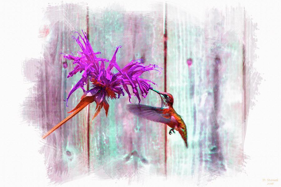 Hummingbird In Color Digital Art