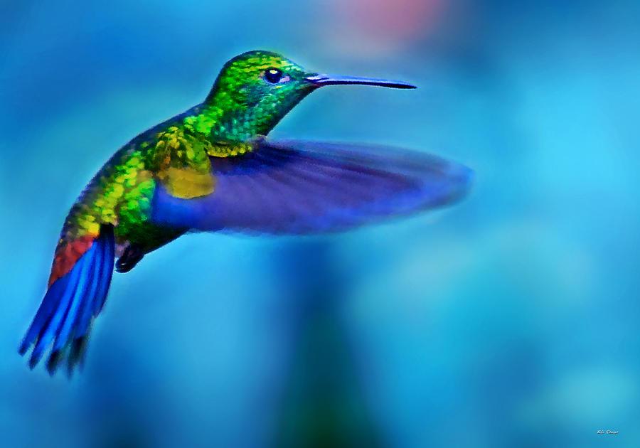 Hummingbird in flight 2 by Bibi Rojas