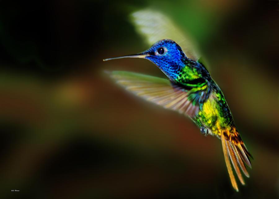 Hummingbird in flight by Bibi Rojas