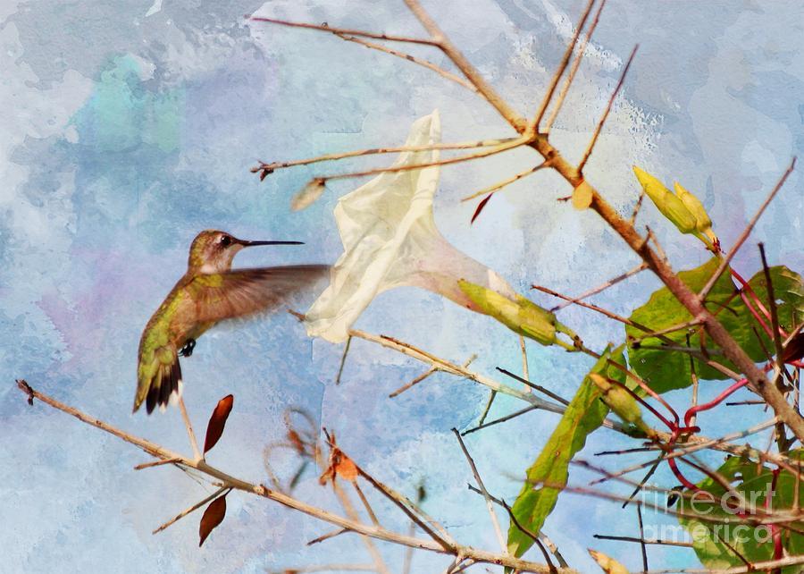 Hummingbird In Flight Photograph