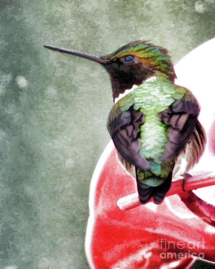 Award Winner Photograph - Hummingbird by Laura Atkinson