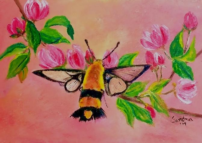 Hummingbird Moth by Sandra Maddox
