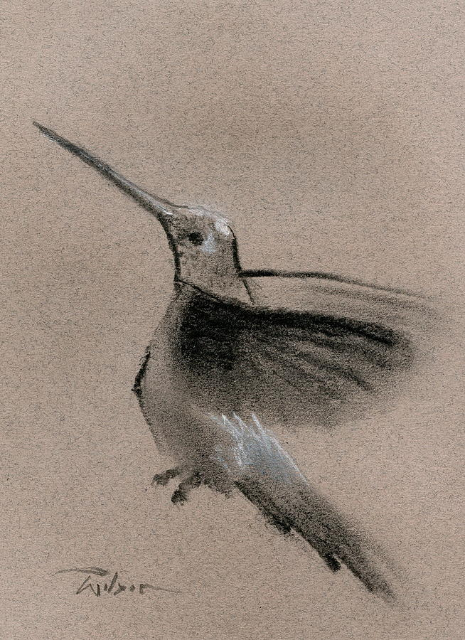 Hummingbird Painting - Fine Art Charcoal Rendering Of A Hummingbird In Flight. by Ron Wilson
