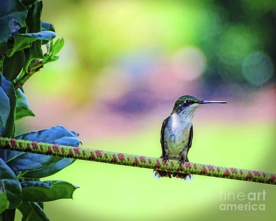 Hummingbird on Watch by Sue Melvin