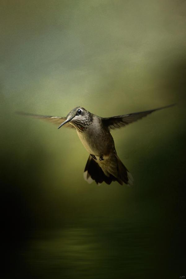 Jai Johnson Photograph - Hummingbird Over Water by Jai Johnson