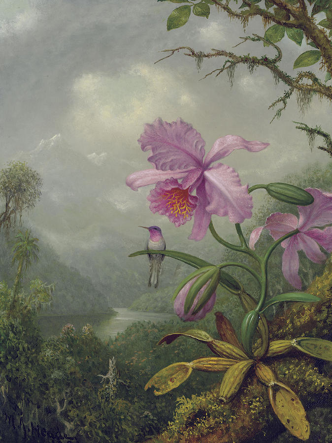 Hummingbird Painting - Hummingbird Perched On An Orchid Plant by Martin Johnson Heade
