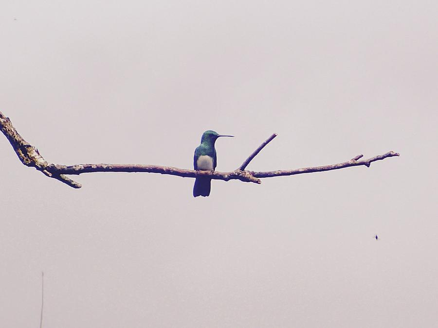 Hummingbird Photograph - Hummingbird Profile by Lora Louise