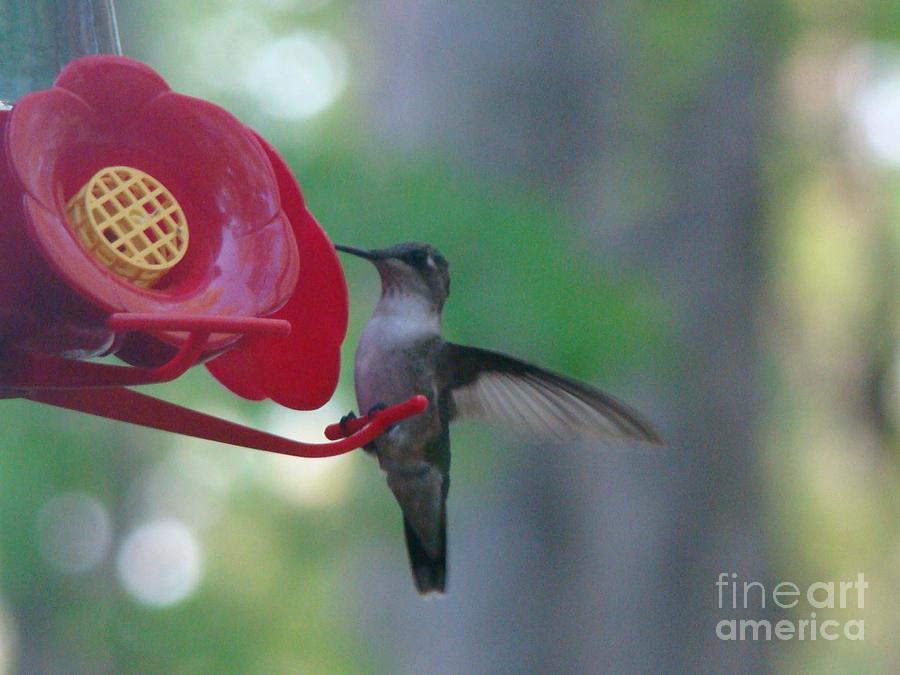 Hummingbird  by Rand Herron