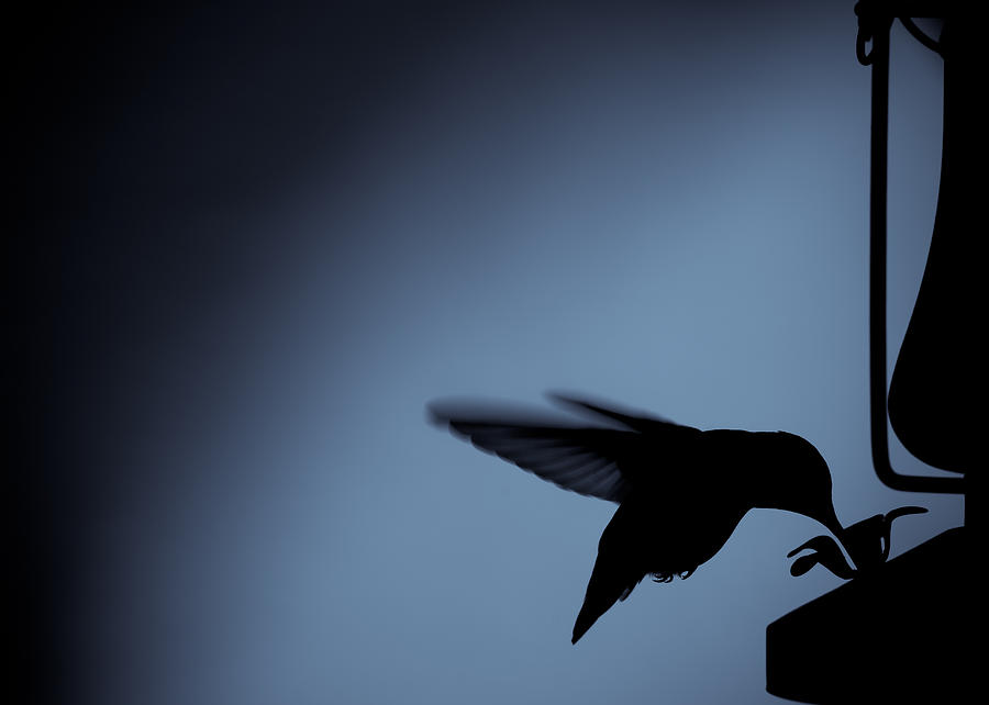 Hummingbird Photograph - Hummingbird Silhouette by Edward Myers