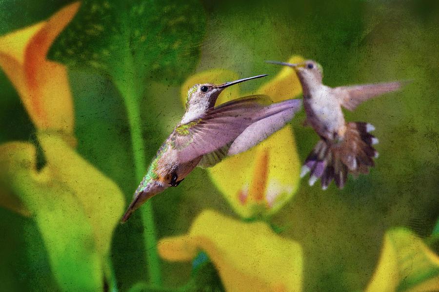 Hummingbird Photograph - Hummingbirds In Virginia by Betsy Knapp