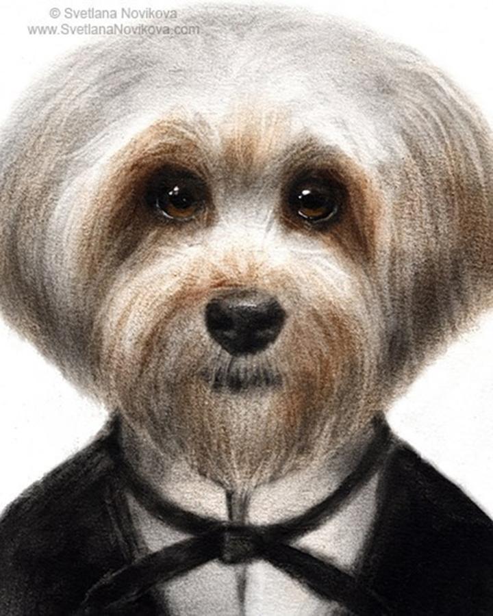 Painting Photograph - Humorous Dressed Dog Painting By by Svetlana Novikova