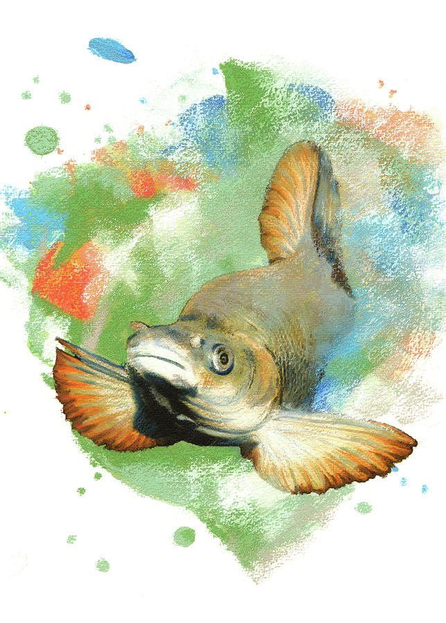 Humpback Chub Pastel - Humpback Chub by Janice Lawrence