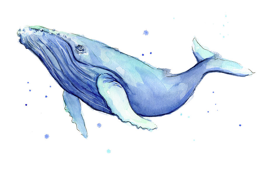 humpback whale watercolor painting by olga shvartsur Leg Clip Art Igloo Clip Art