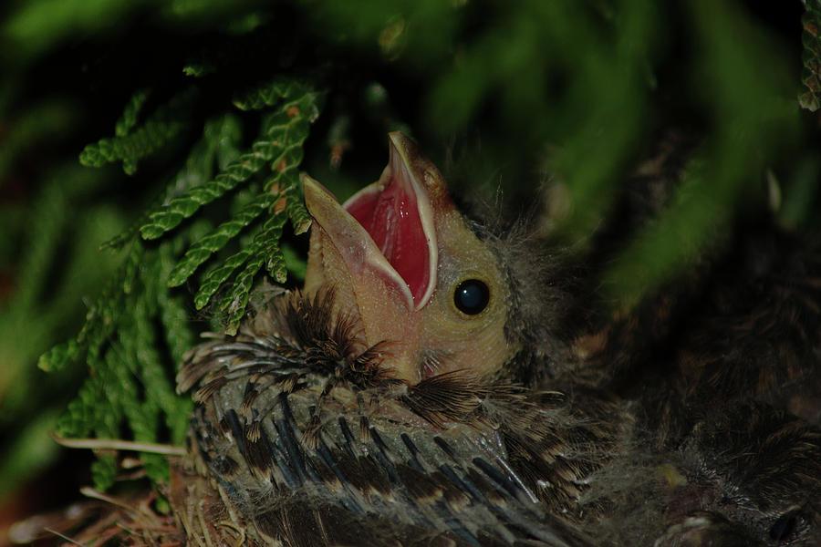 Bird Photograph - Hungry Bird by Gaby Swanson