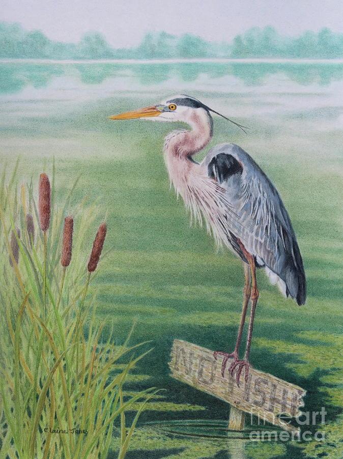 Hungry Heron by Elaine Jones