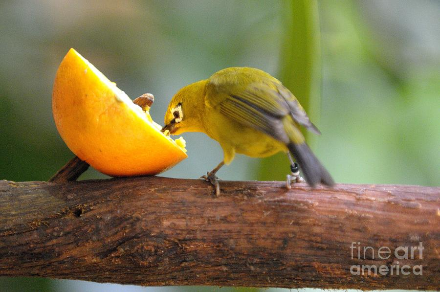 Bird Photograph - Hungry... by Miguel Celis