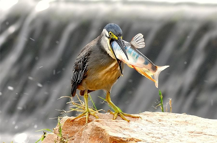 Открытки новым, прикол про птиц картинки