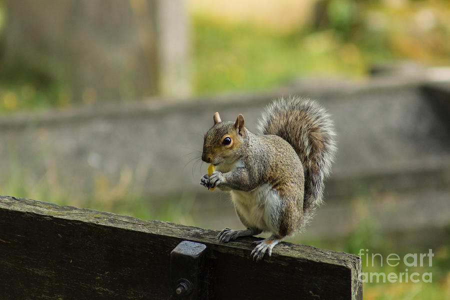Hungry Squirrel by Fabrizio Malisan