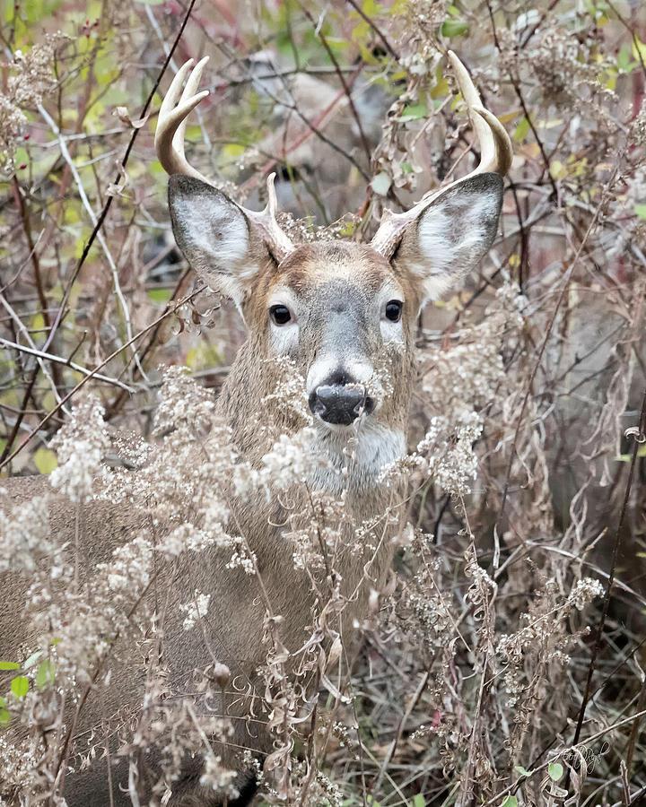 Deer Photograph - Hunters Dream by Everet Regal