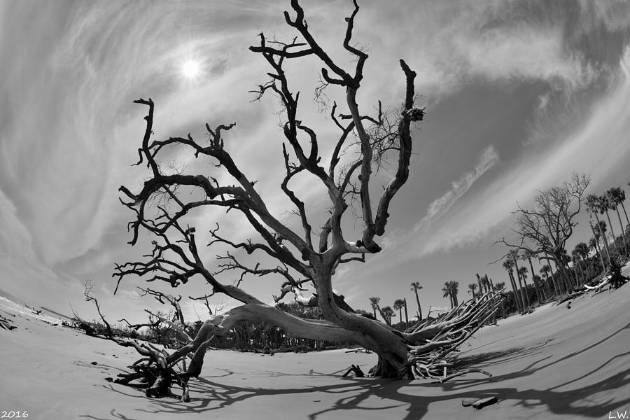 Beach Photograph - Hunting Island Beach And Driftwood Beaufort Sc Black And White by Lisa Wooten