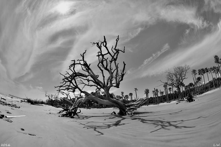 Hunting Island Beach Photograph - Hunting Island Beach And Driftwood Black And White by Lisa Wooten