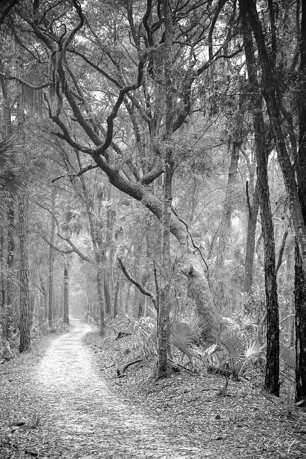 Canvas Photograph - Hunting Island Path  by Phill Doherty