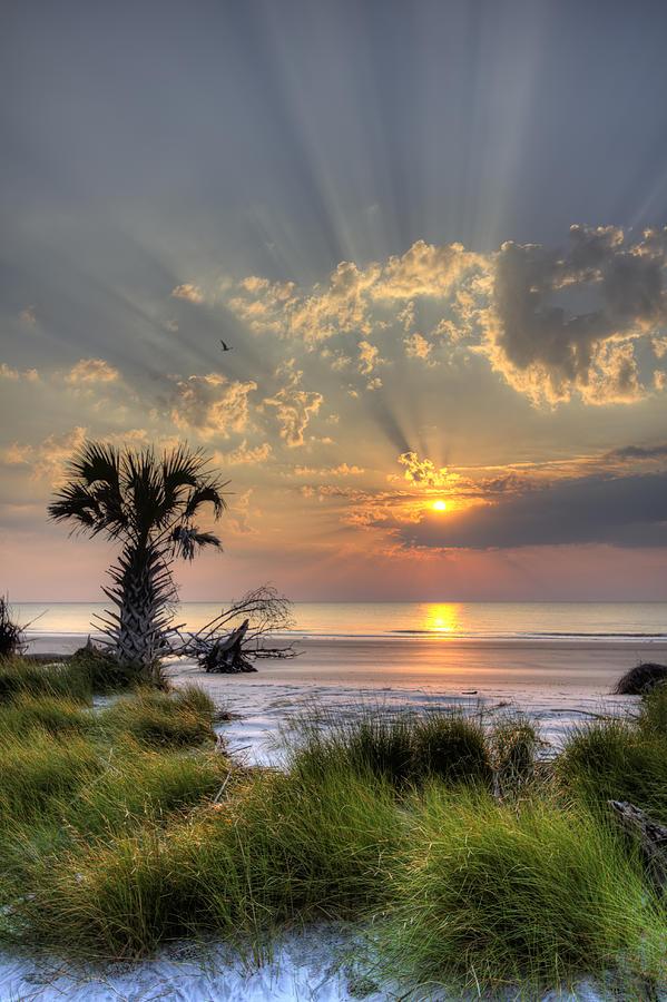Hunting Island Photograph - Hunting Island Sc Sunrise Palm by Dustin K Ryan