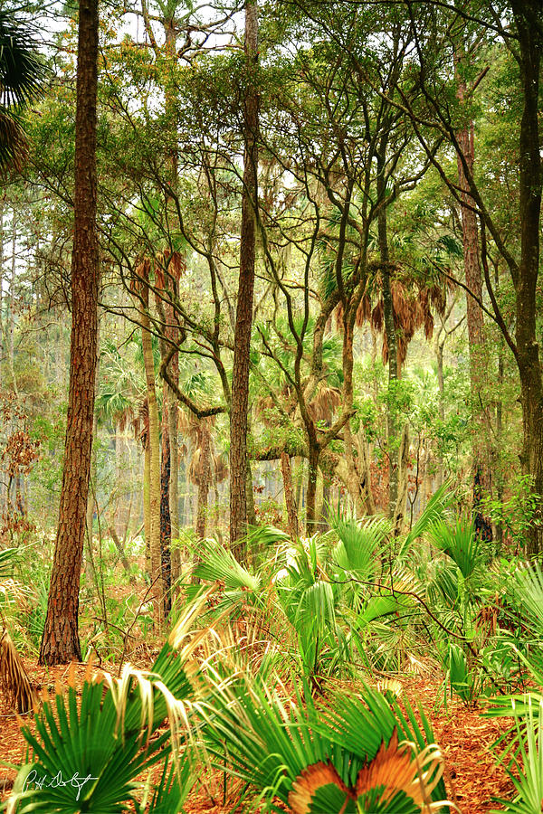 Hunting Island Photograph - Hunting Island State Park by Phill Doherty