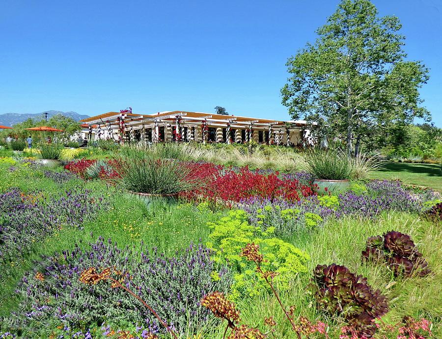 Huntington Gardens In San Marino Photograph By Lyuba Filatova
