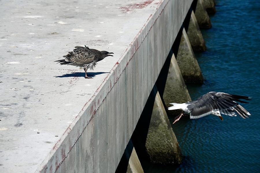 Birds Photograph - Hurry Back Mum by Aidan Moran