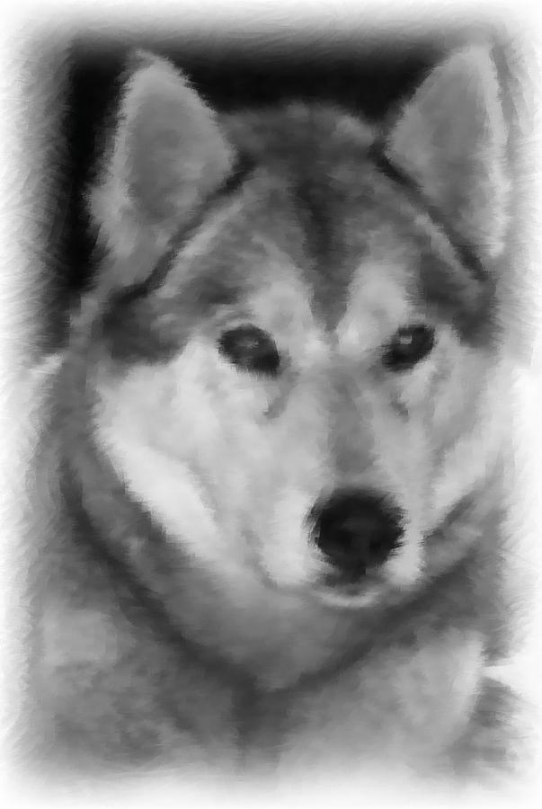 Active Drawing - Husky by Lisa Hebert