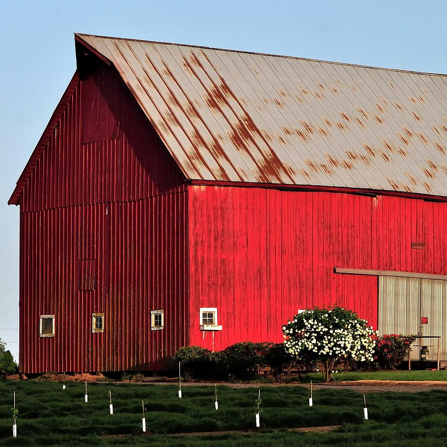 Hwy 47 Red Barn 21x21 Photograph