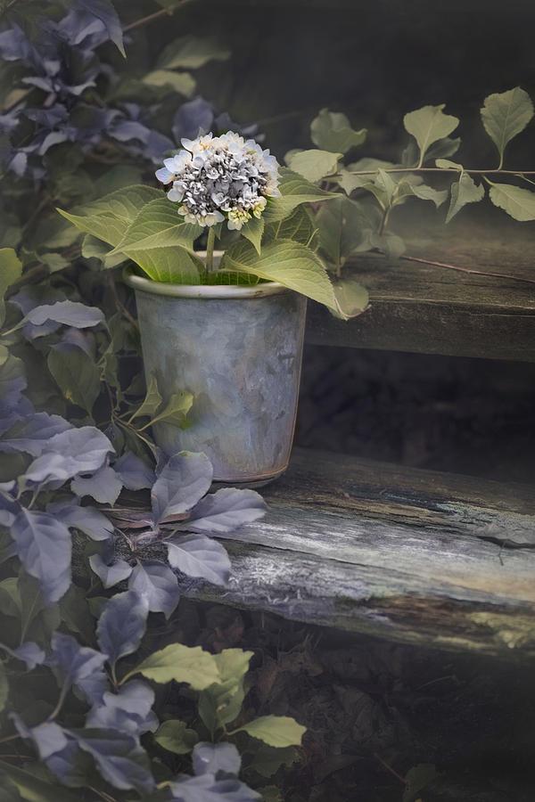Hydrangea Eve by Robin-Lee Vieira