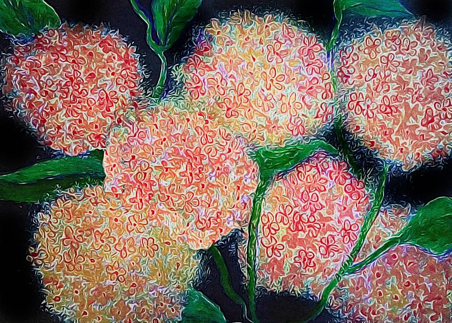 Flowers Photograph - Hydrangea Inspiration by Anne Sands