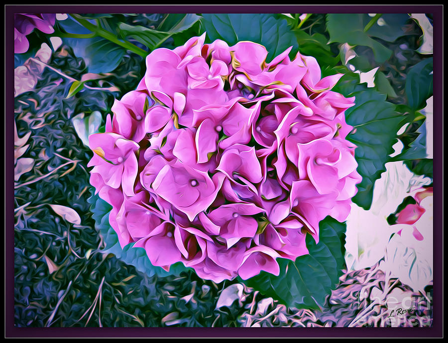 Hydrangea by Leslie Revels