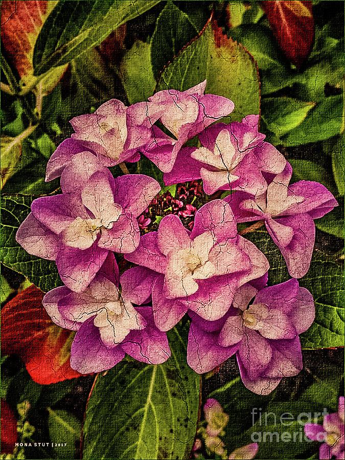 Pink Hydrangea Autumn Flower Mixed Media