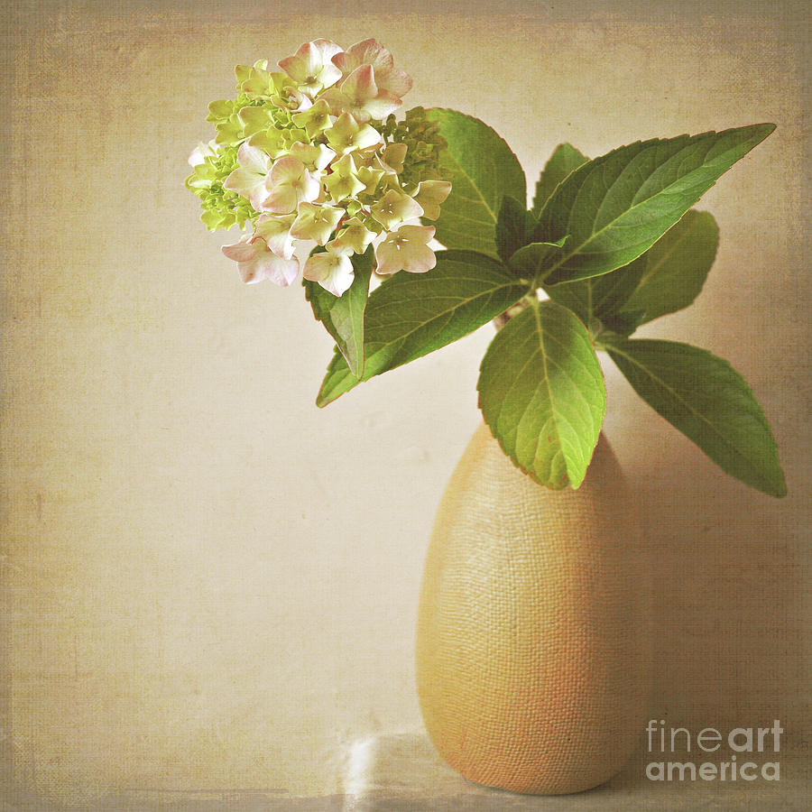 Hydrangea Photograph - Hydrangea With Leaves by Lyn Randle
