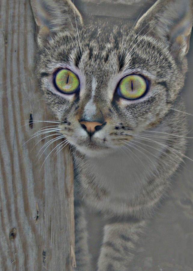 Cat Photograph - Hypnotize by JAMART Photography