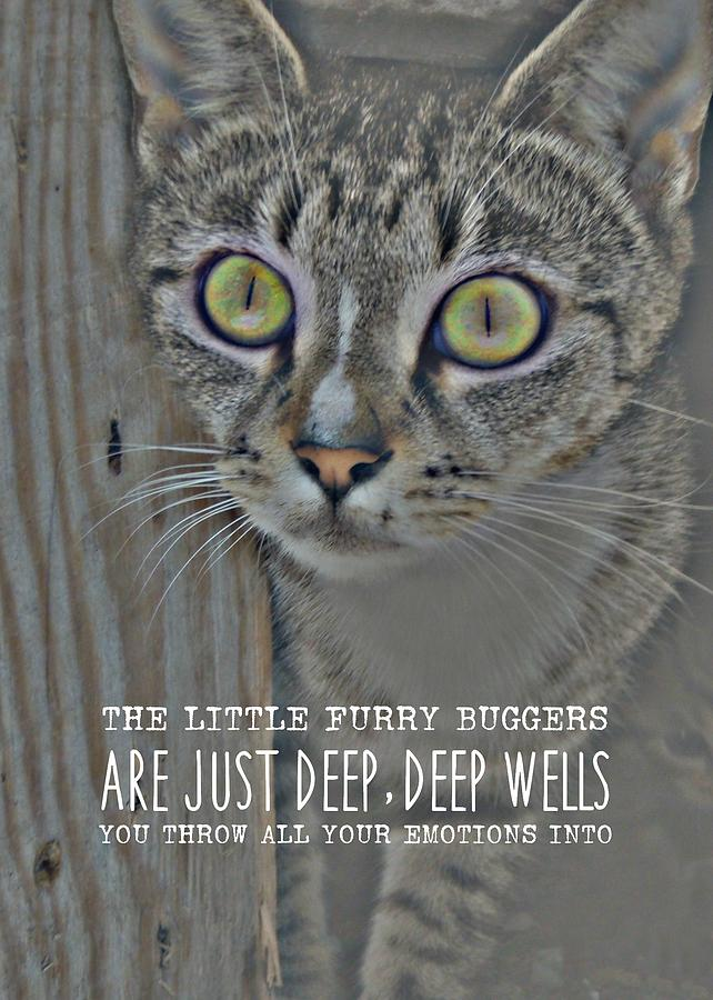 Cat Photograph - Hypnotize Quote by JAMART Photography
