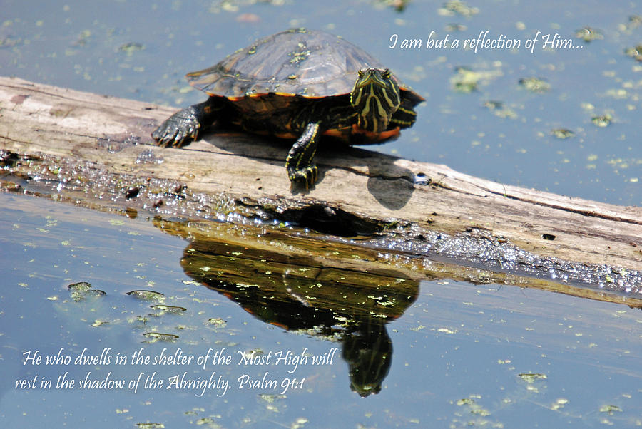 Blanton Photograph - I Am But A Reflection by Teresa Blanton