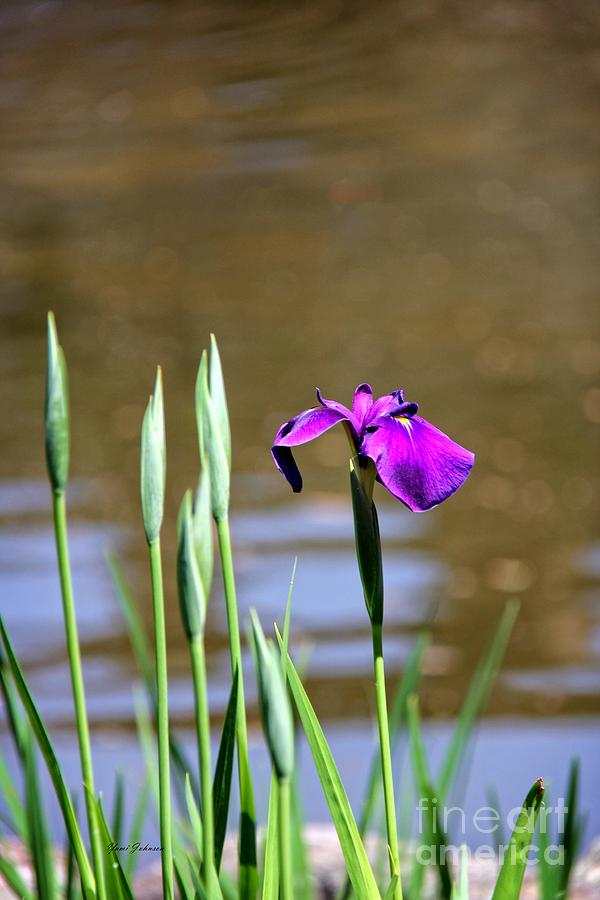 Iris Photograph - I Am First  by Yumi Johnson