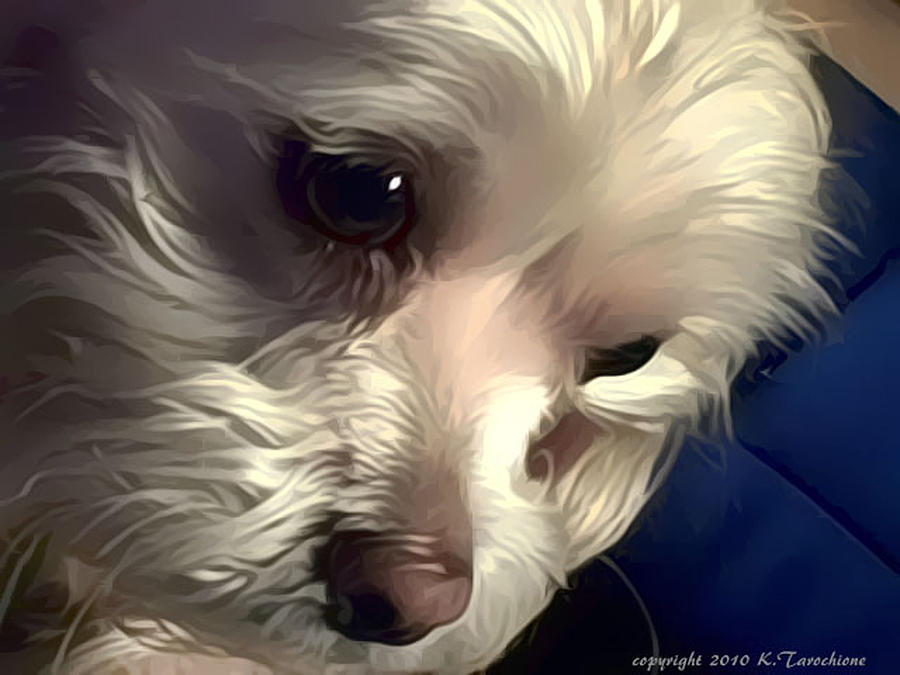 Mandie Photograph - I Am Serious by Kathy Tarochione