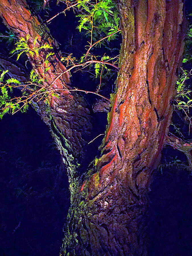 I Am Tree Photograph by Guy Ricketts