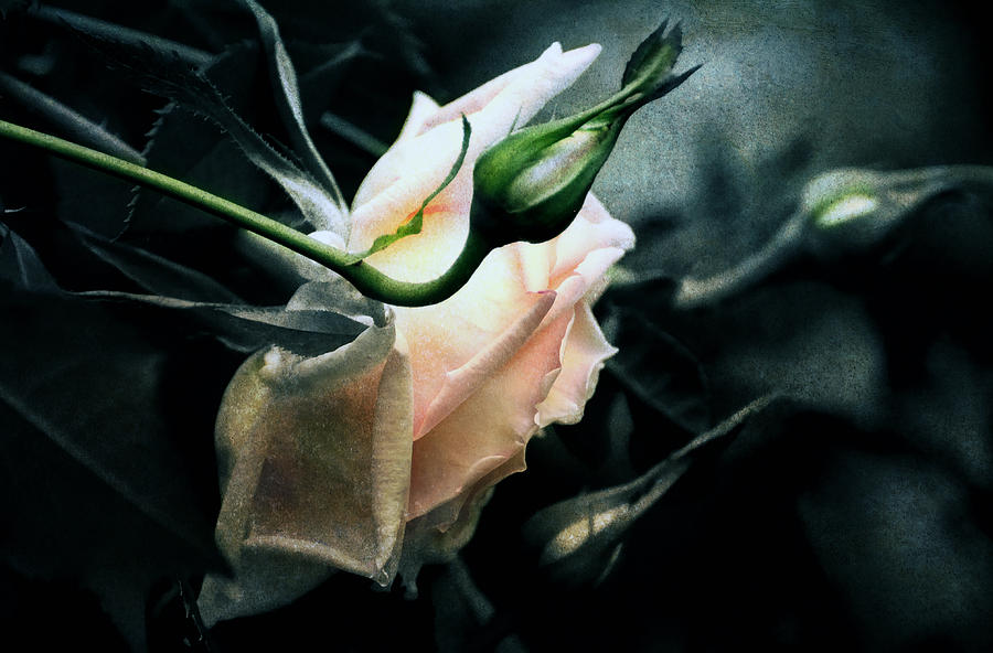 Rose Digital Art - I Am Your Ghost Of A Rose by Georgiana Romanovna