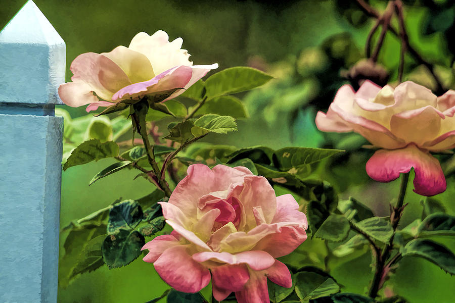 I Beg Your Pardon I Never Promised You A Rose Garden Photograph by ...